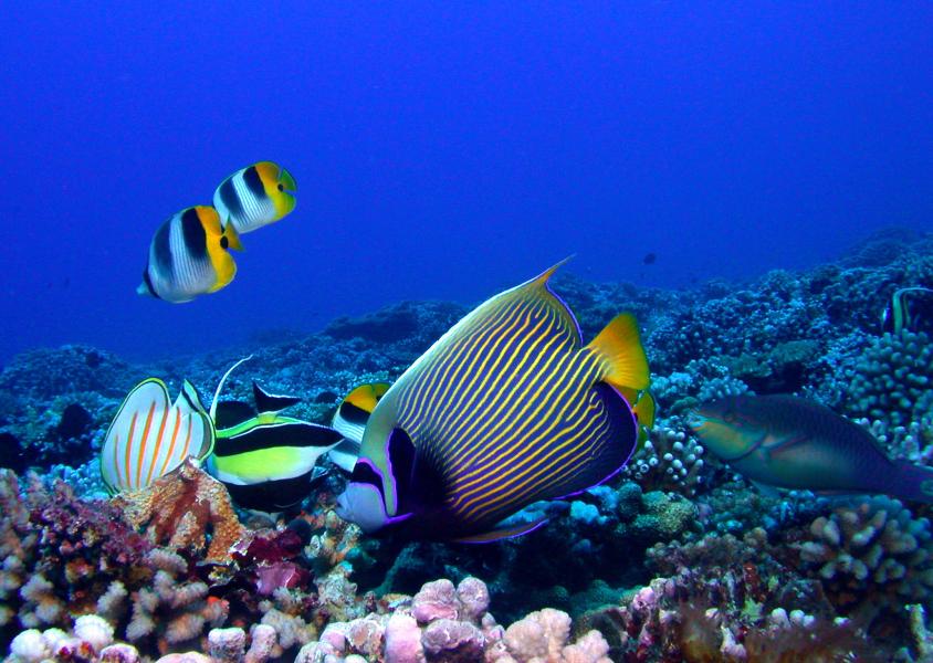 Poissons de récif corallien à Tahiti