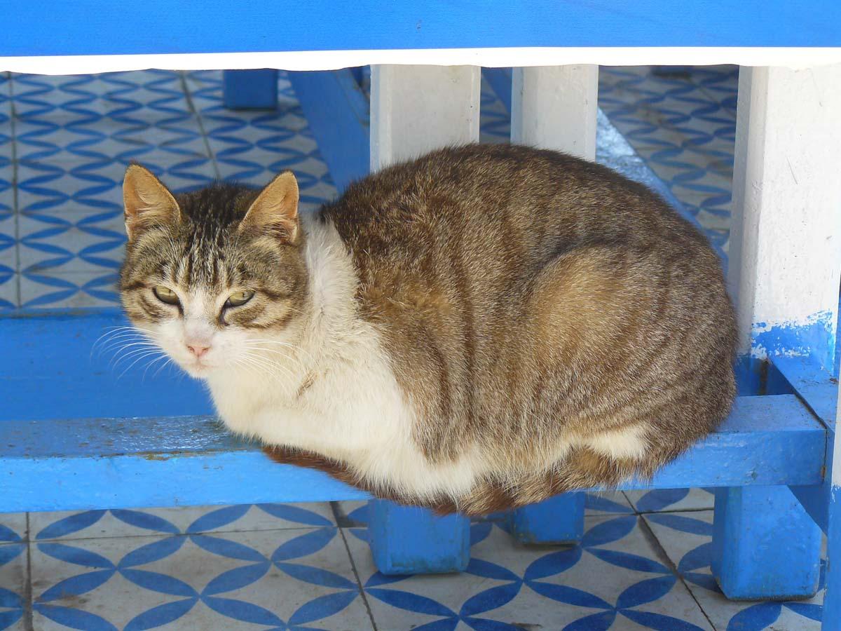 Un chat à Essaouira