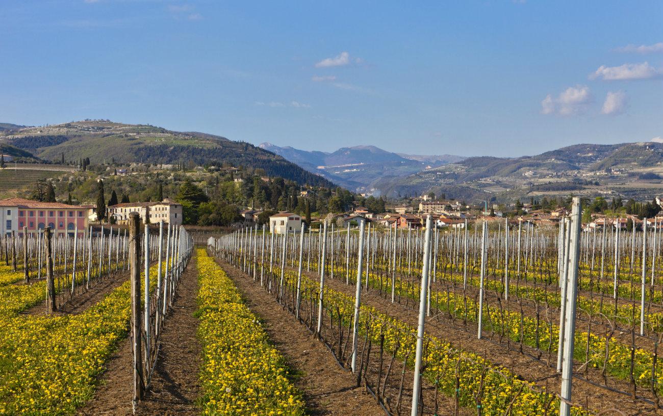 Vignoble de la Valpolicella
