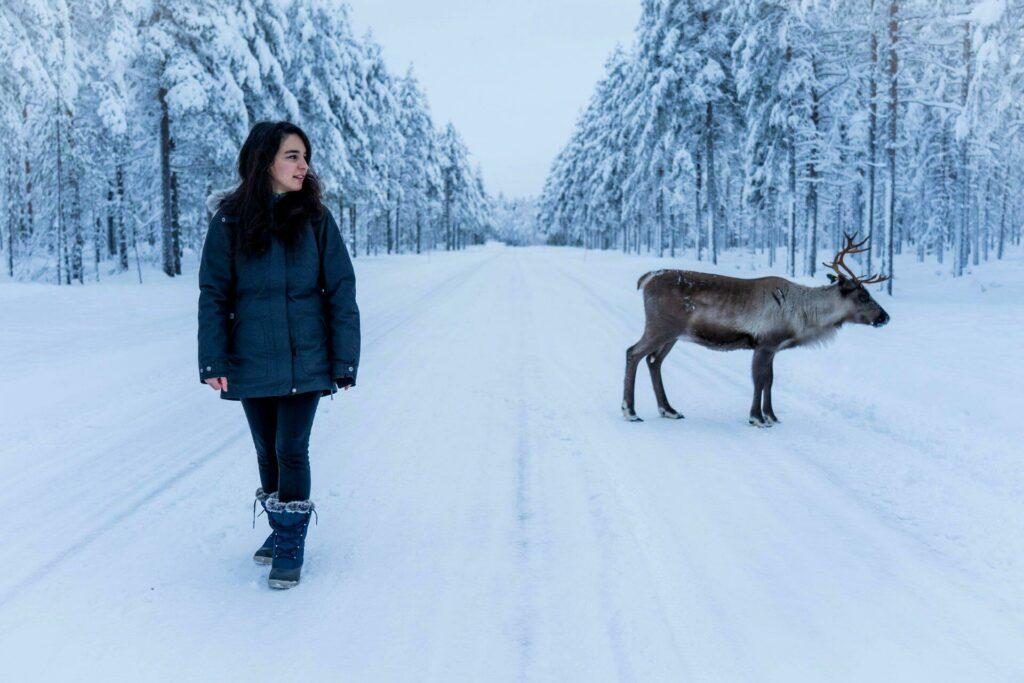 Rencontre avec un renne en Laponie