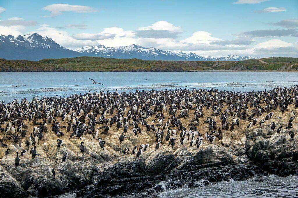 Ushuaia ile de cormorans Canal Beagle