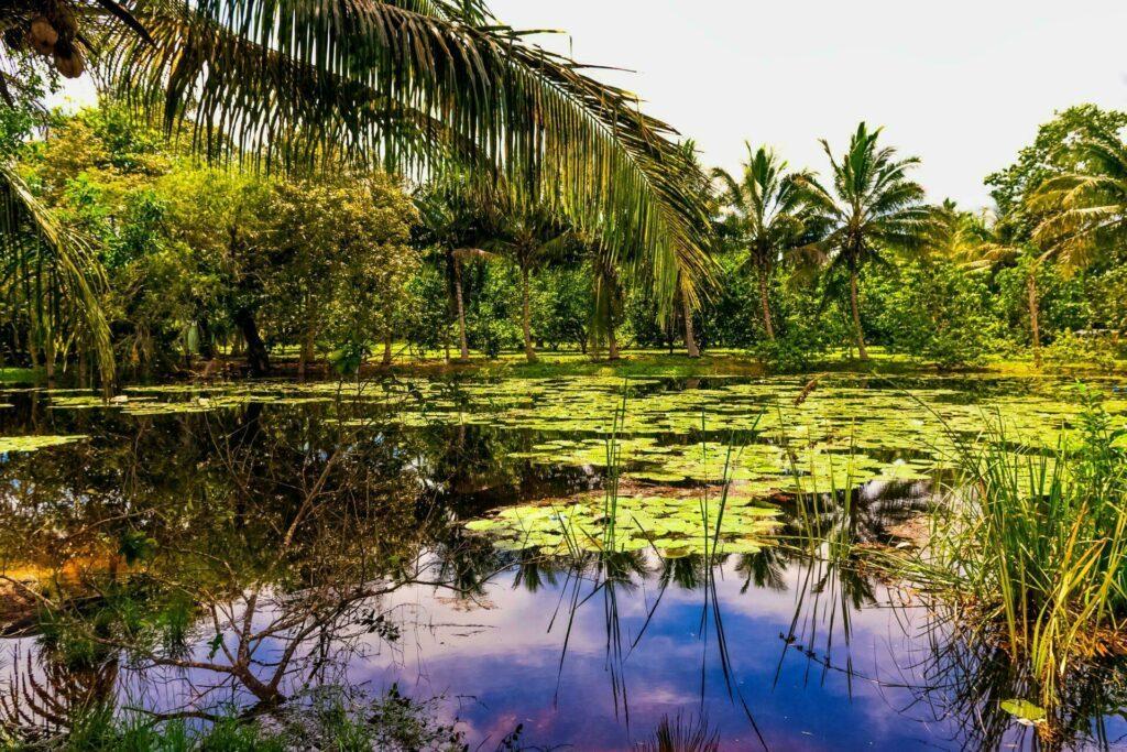 Cuba Péninsule de Zapata parc naturel