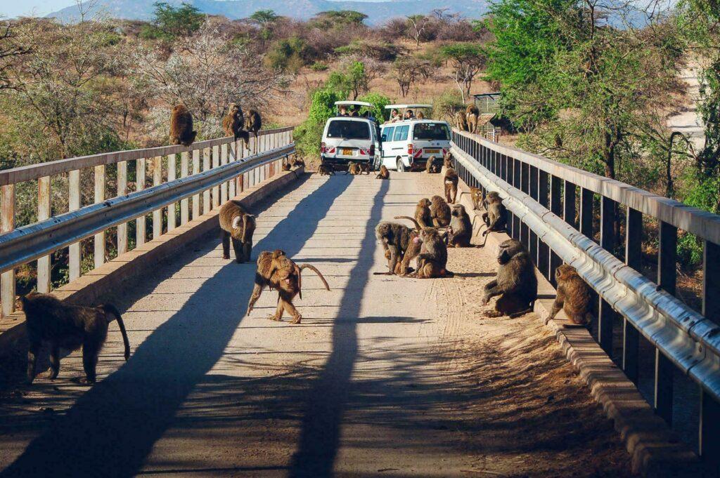 Safari photos minibus 4x4