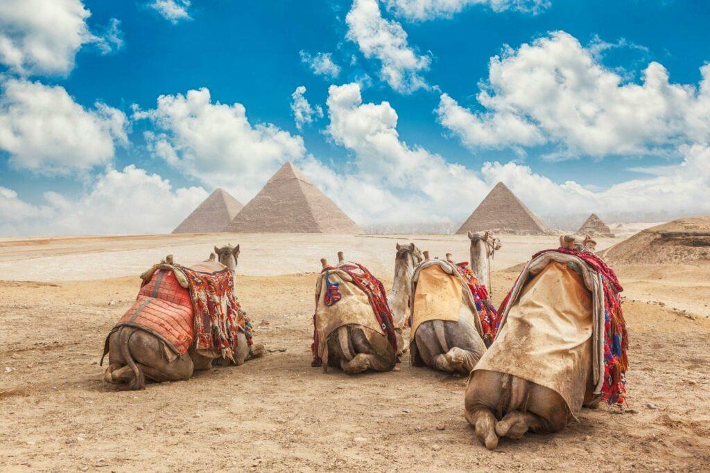 Egypte Caire chameaux face aux Pyramides de Gizeh