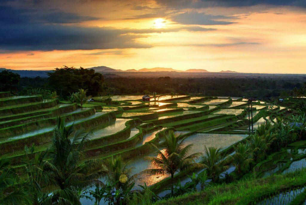 Rizières typiques à Bali