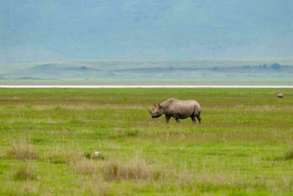 Rhinoceros noir Ngorongoro Tanzanie