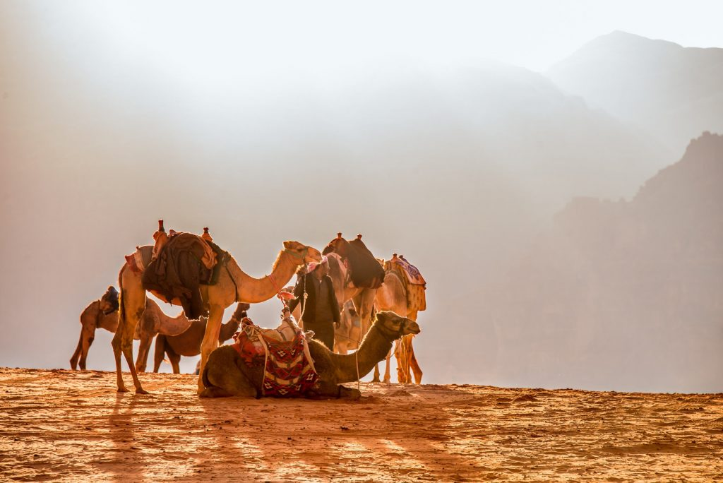 chameaux desert