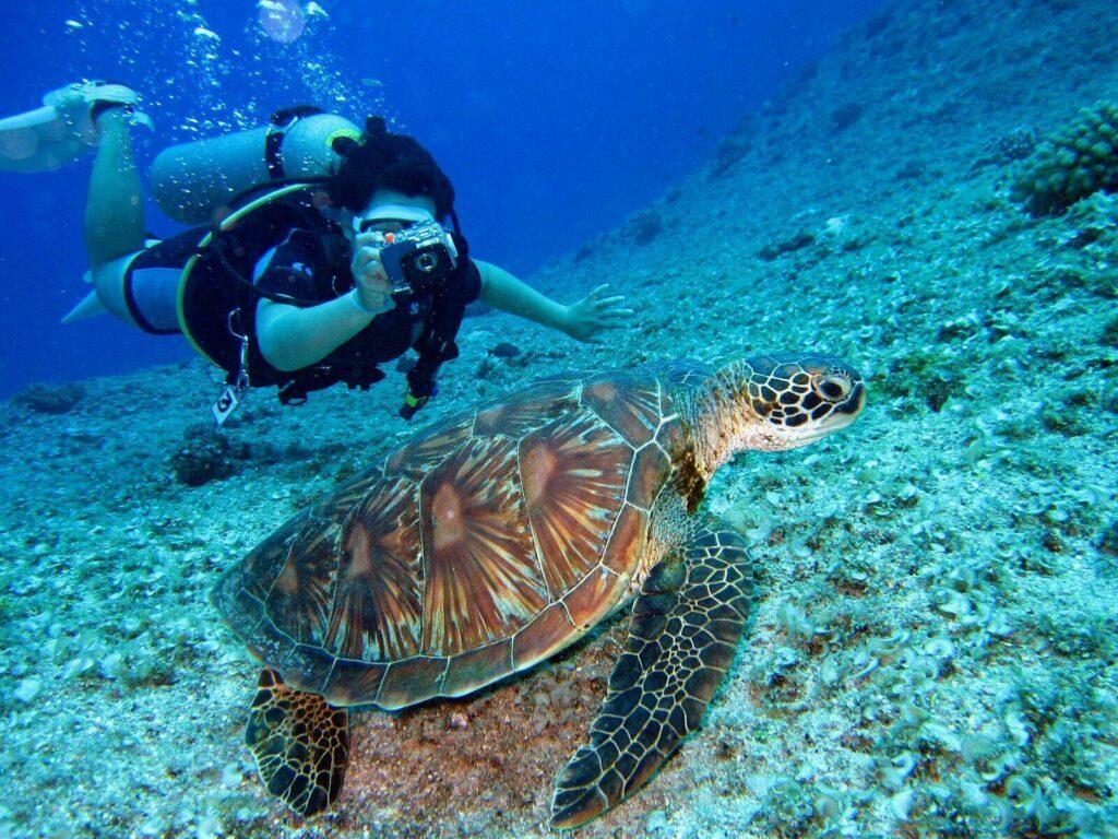 plongee maurice