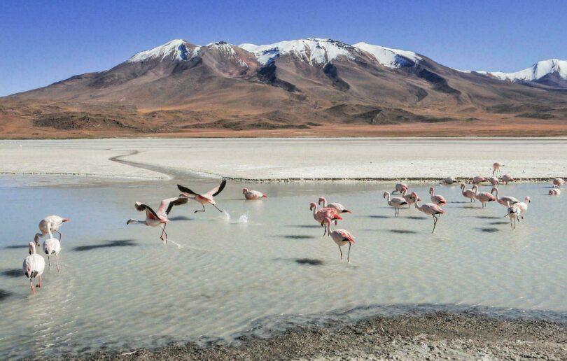 Lagunes Bolivie