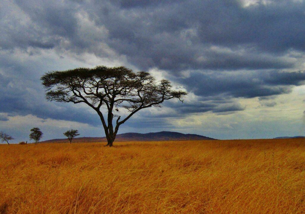 Savane Tanzanienne