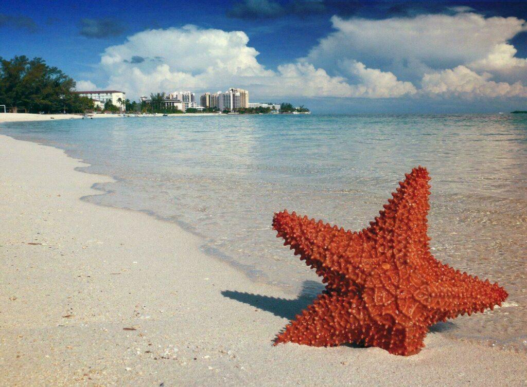 etoile de mer bahamas