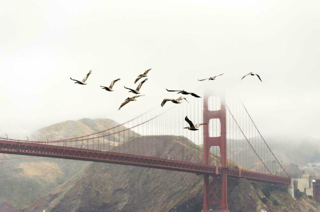 Oiseaux et pont
