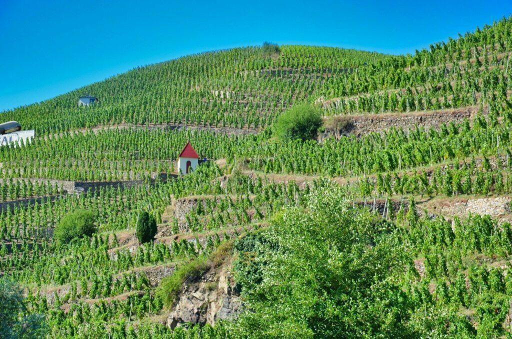 Vignoble de Côte-Rôtie à Ampuis dans le Pilat
