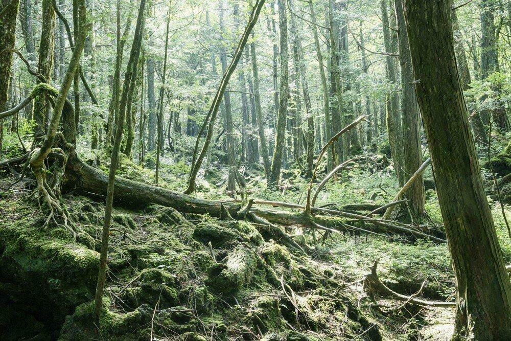 Forêt hantée de Aokigahara, Japon