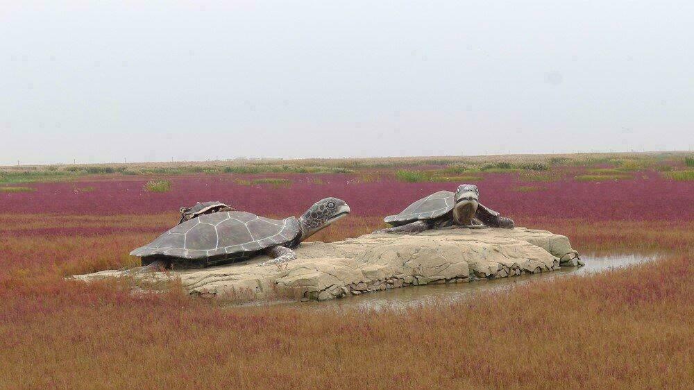 Tortues sur la plage rouge de Panjin
