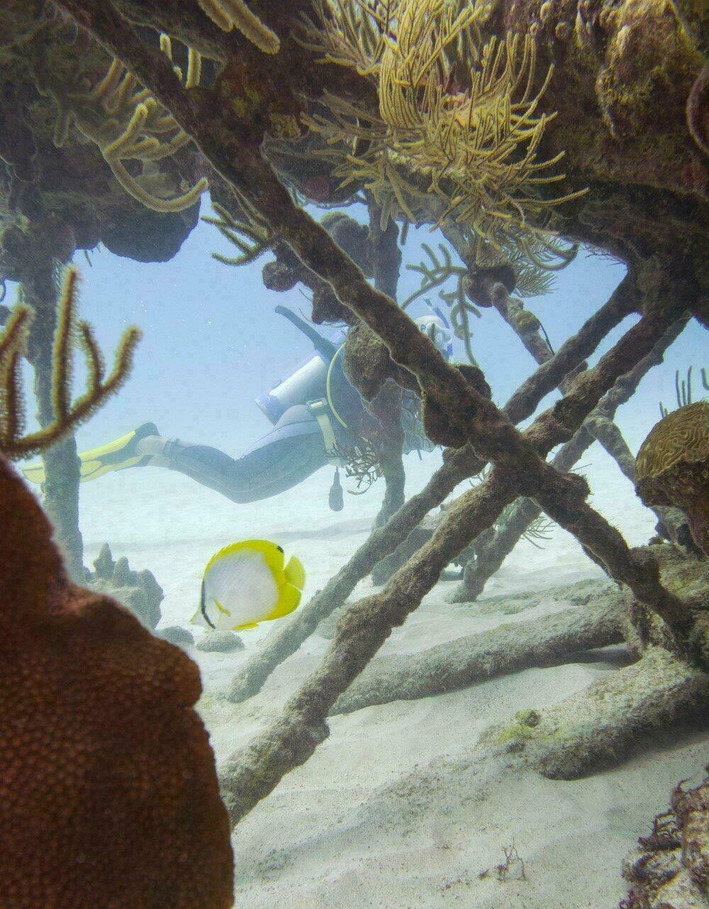 Plongée sous-marine aux Bermudes