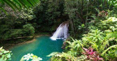 La Jamaïque sauvage