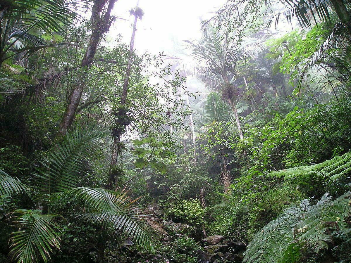 Forêt d'El Yunque