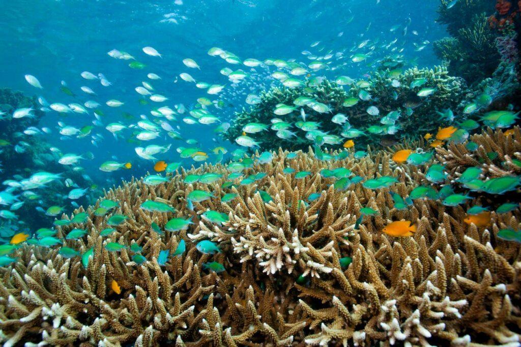 Bali fond marin plongée ile Menjangan