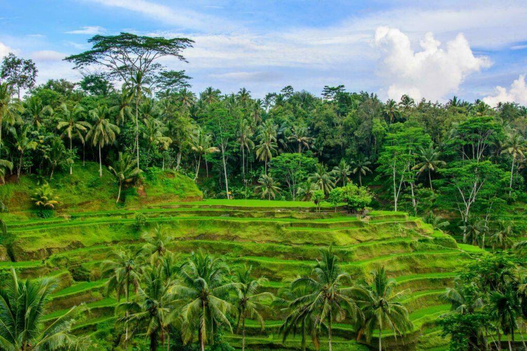 Bali rizières en terrasse Ubud