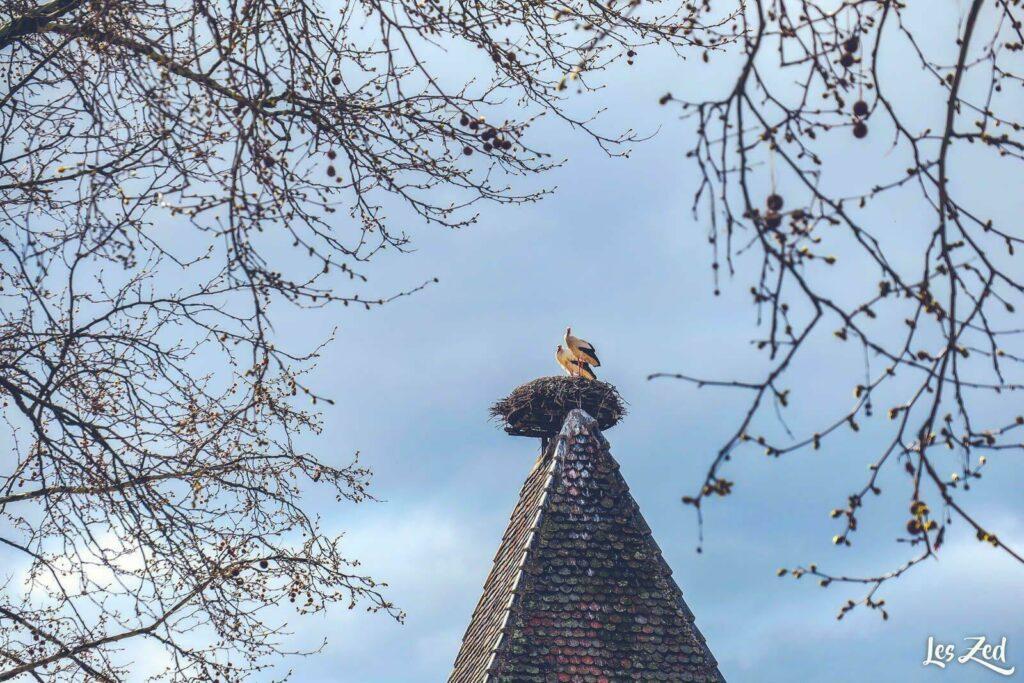 Cigognes en Alsace, à Turckheim