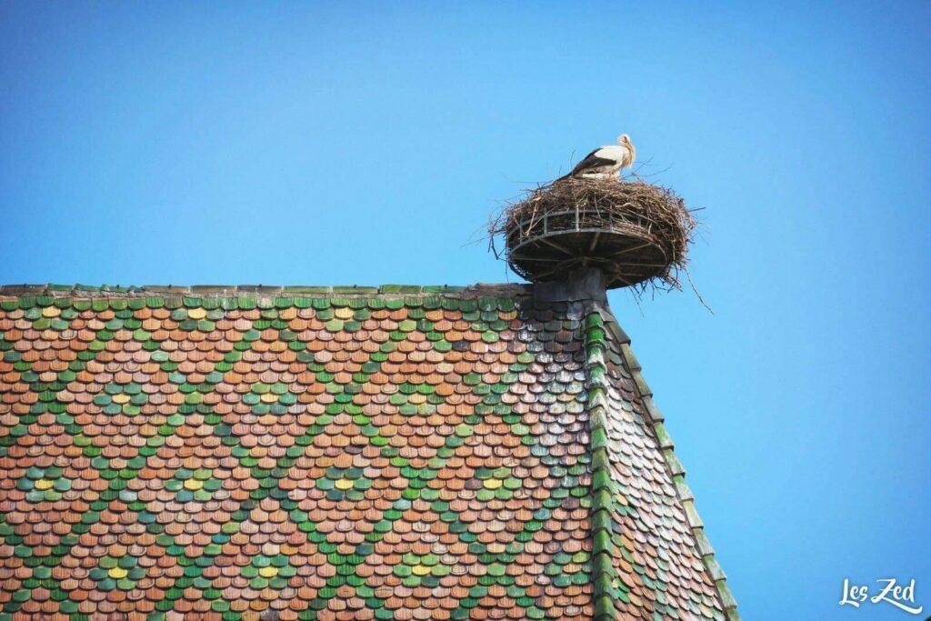 Cigognes en Alsace, à Colmar