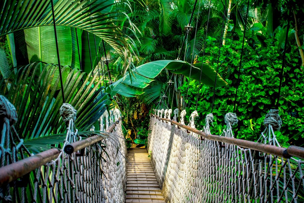 Pont suspendu en Amazonie