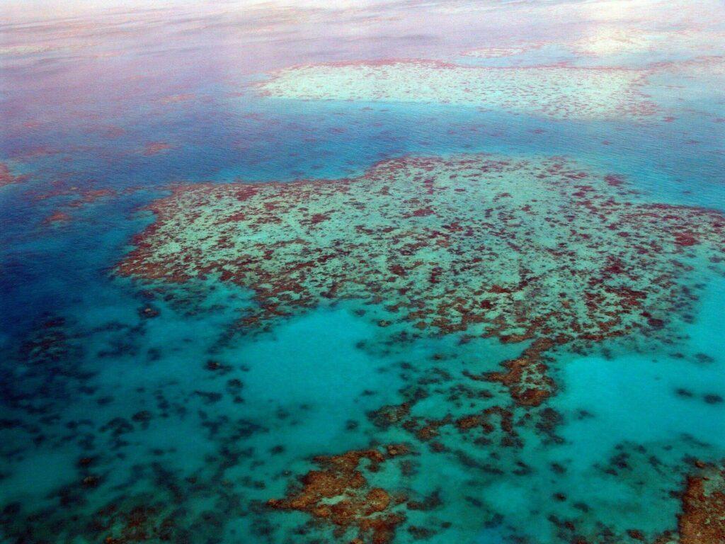 Découvrir une barrière de corail en Australie