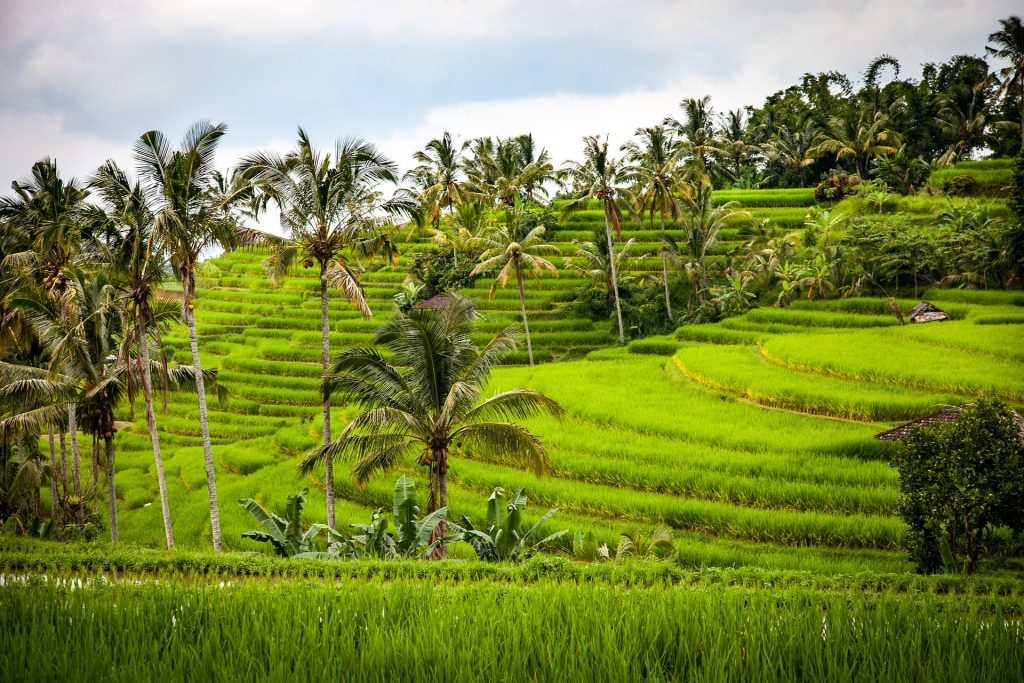 Partir en Indonésie