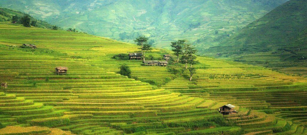 Les rizières en chine