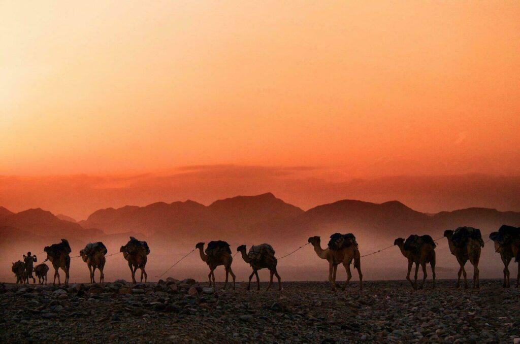 Les caravanes de sel en Ethiopie