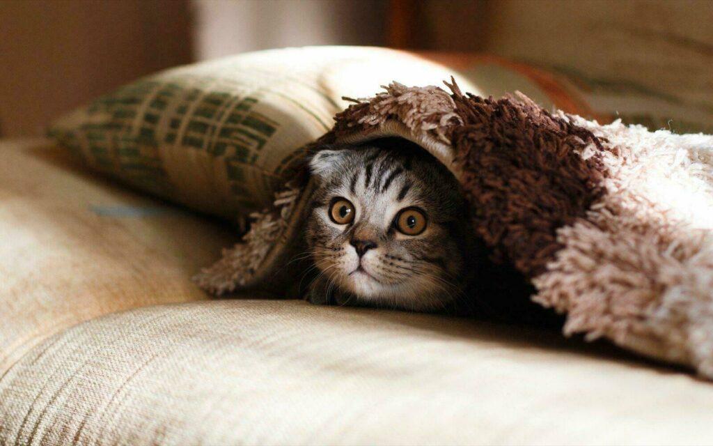 Chat trop mignon à la maison