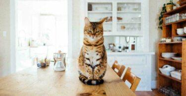 Faire garder son chat pendant ses vacances
