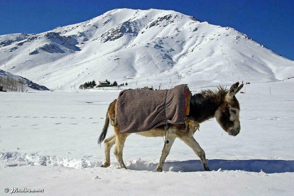 ane maroc à la neige
