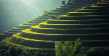 rizières thailande