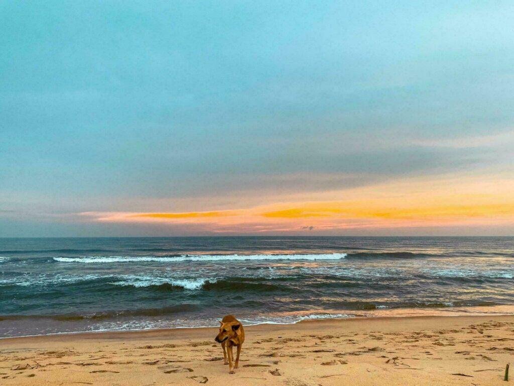 Les magnifiques plages du Sri Lanka