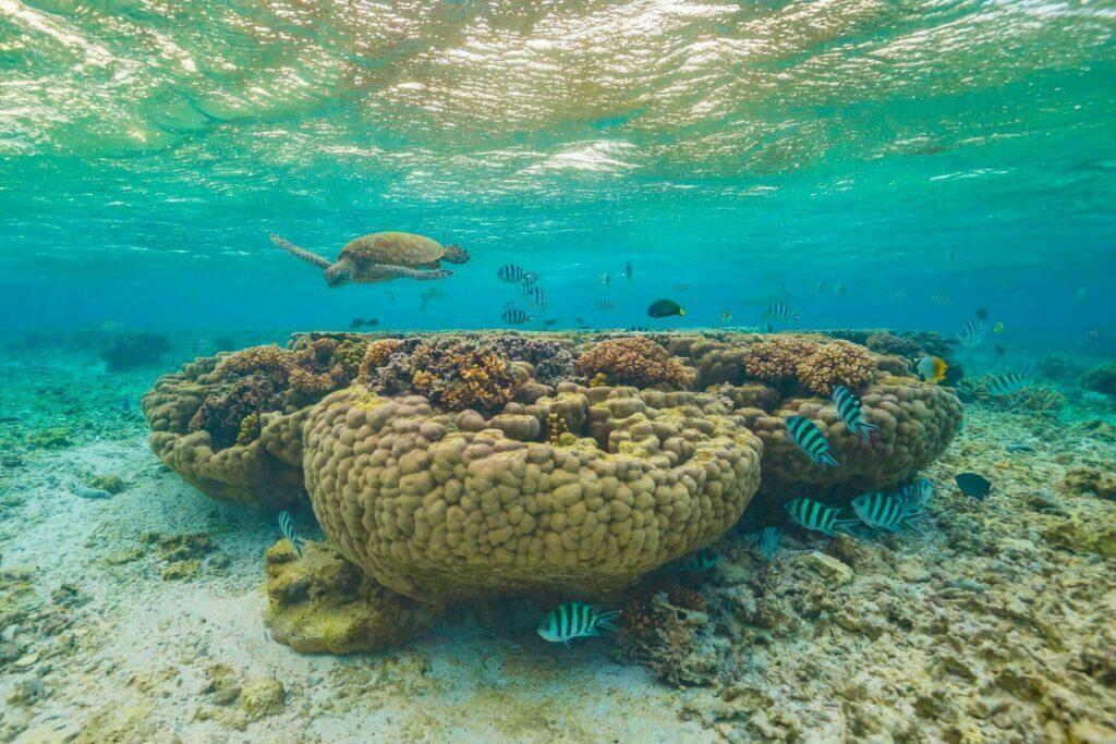 corail Australie