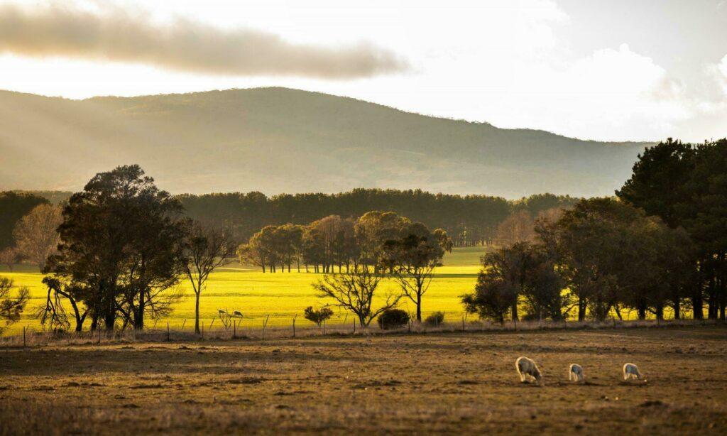 ferme australienne