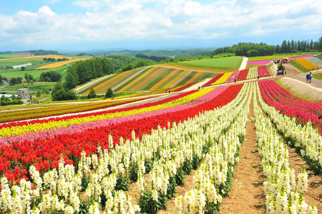 fleurs Hokkaido