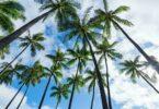 Visiter Hawaï