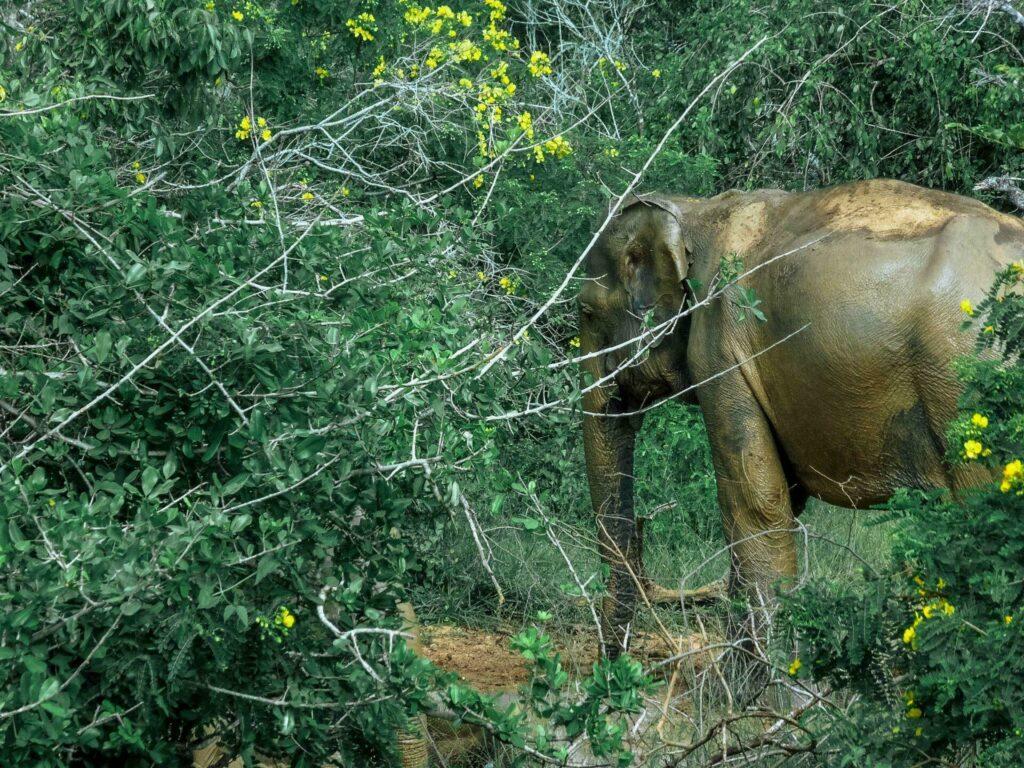 Itinéraire au Sri Lanka Safari à Yala