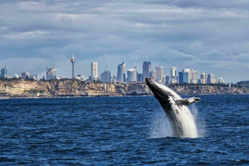 baleine Sydney