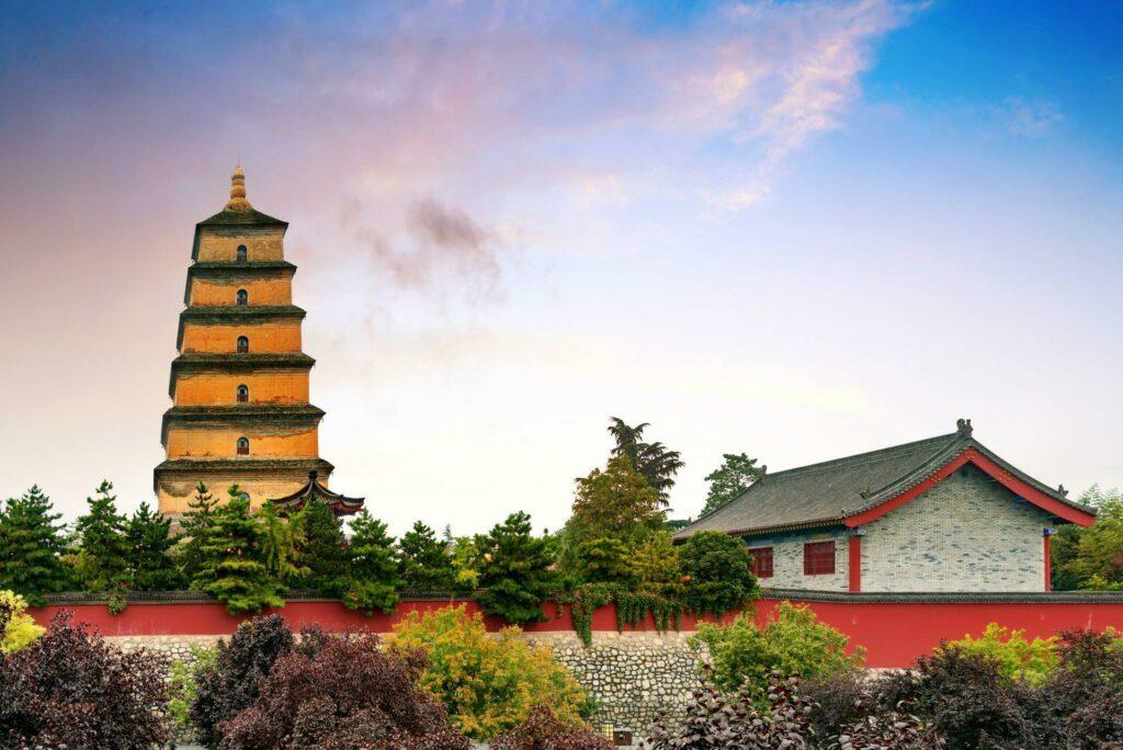 pagode oie sauvage