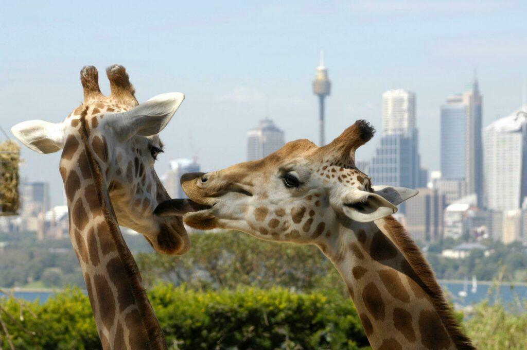 zoo Sydney