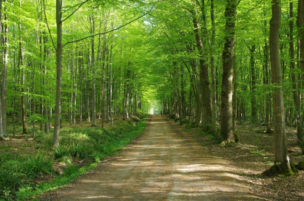 La forêt de Montmorency à Paris