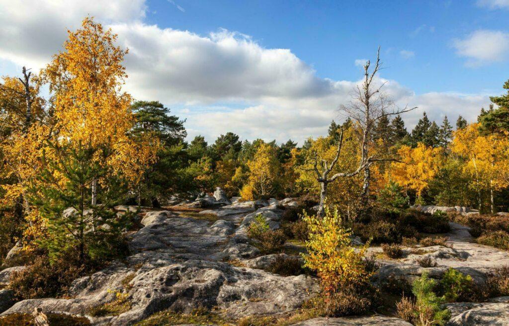 foret-Fontainebleau-autour-de-paris