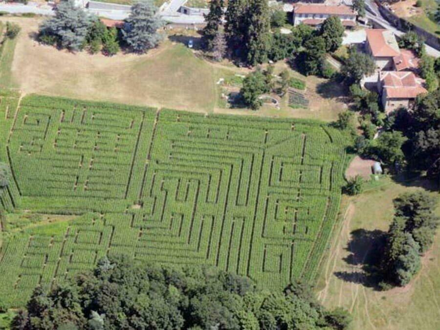 Se perdre dans un labyrinthe de maïs