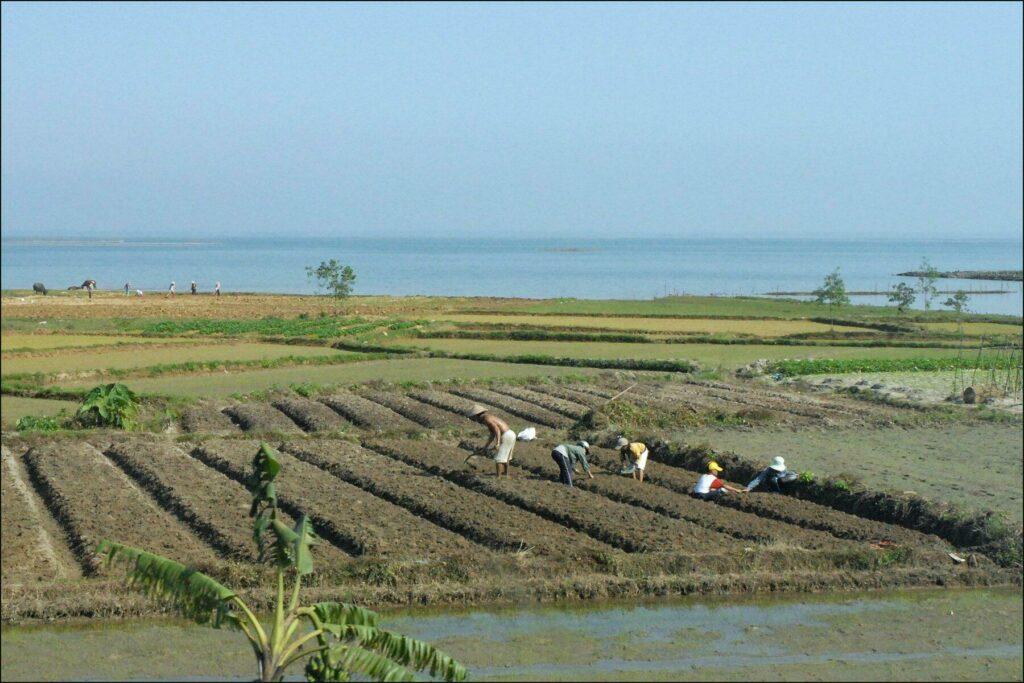 rizière Hue