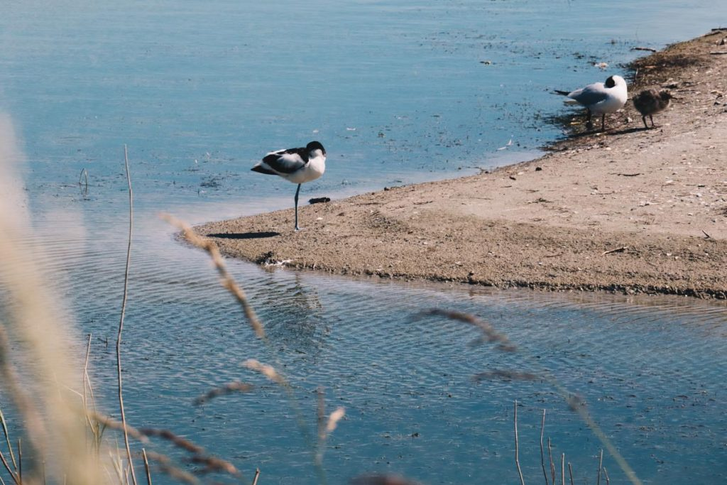 Le Parc du Marquenterre en Baie de Somme