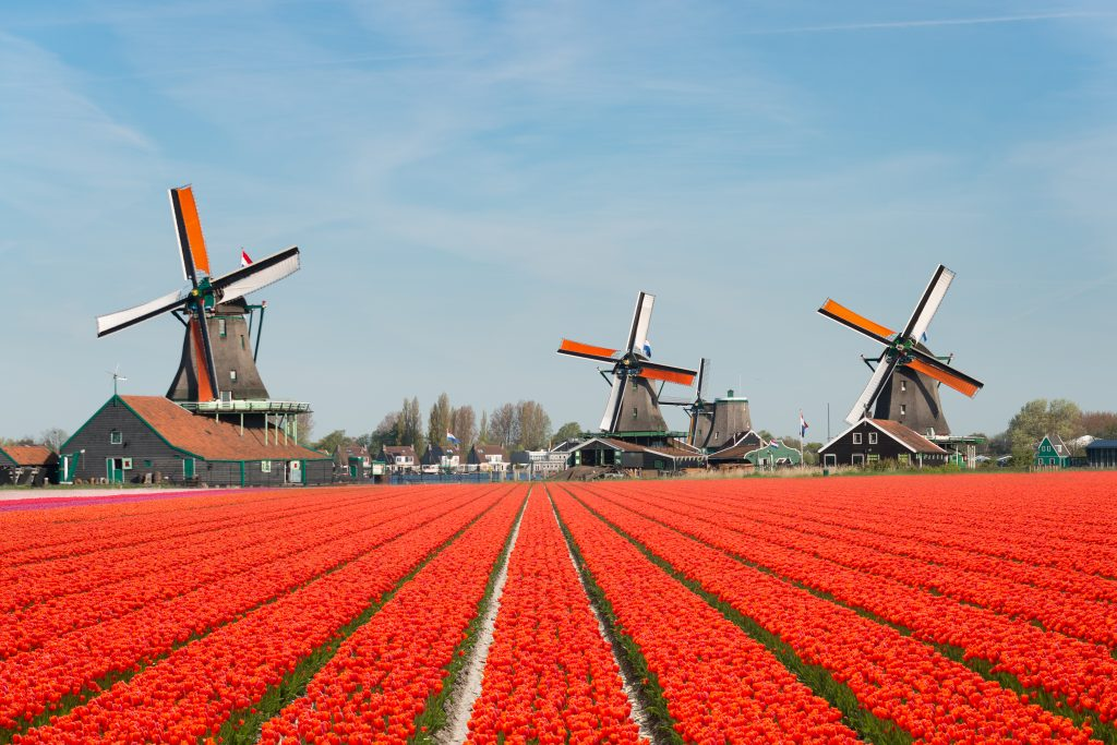 champs tulipes Pays-Bas